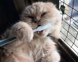 cat-brushing-teeth