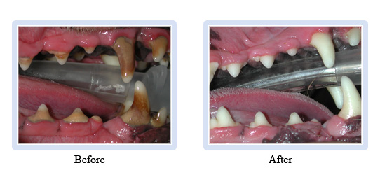 dental_cleaning