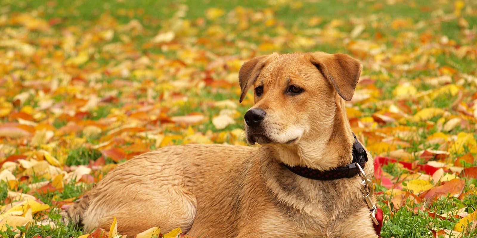 dogbanner2