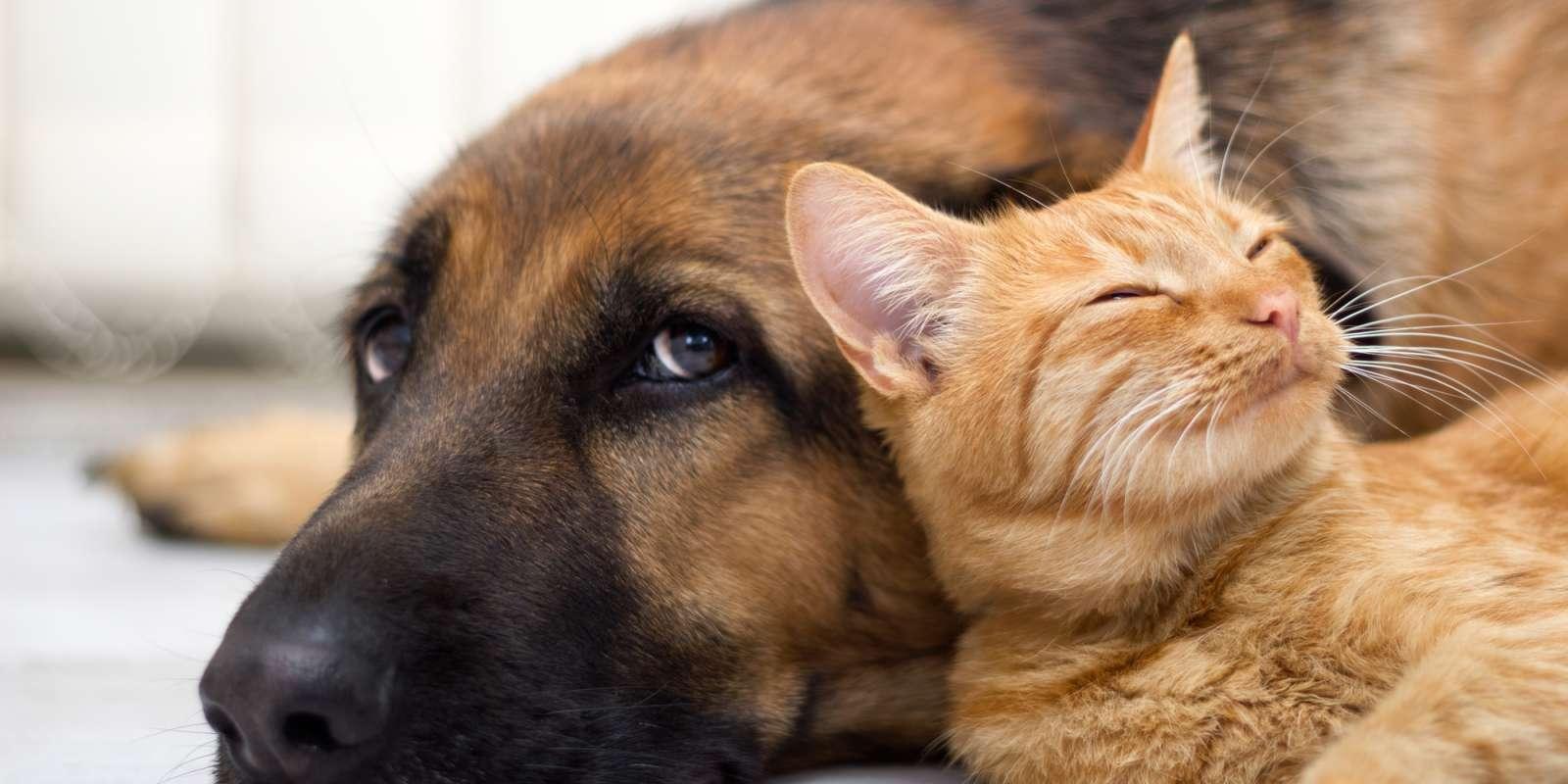 dog-n-cat