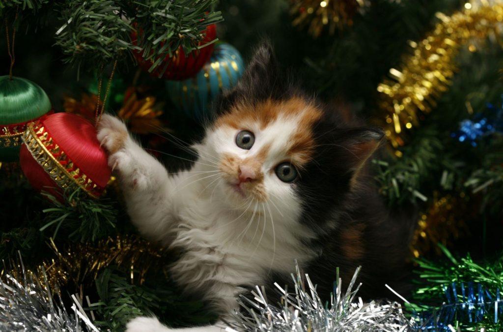 new-year-holiday-christmas-tree-tinsel-cat-cat-kitten-new-year-cat-kitten