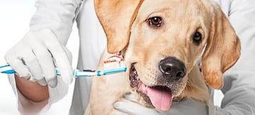 Veterinary Dental Care