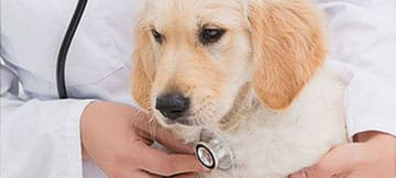 Veterinary Wellness Care